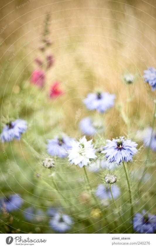 Gretel hinter der Heck' schön Blume grün blau Pflanze Sommer gelb Wiese Blüte Gras hell Feld rosa ästhetisch Wachstum wild