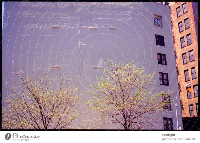 zett´s ecke alt Baum Stadt Haus Wand Fenster Stein Mauer hoch Fassade Laterne New York City hässlich eckig Koloss massiv