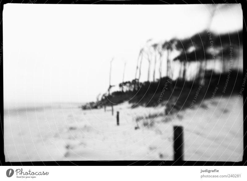 Weststrand Umwelt Natur Landschaft Pflanze Baum Küste Strand Ostsee Meer Darß außergewöhnlich natürlich wild schwarz weiß Stimmung traumhaft Wald Windflüchter