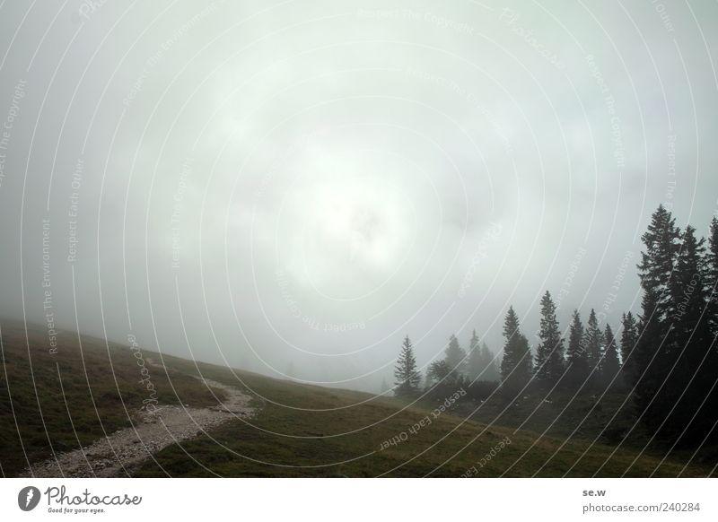 Wohin des Wegs? Natur Wolken Sommer Herbst schlechtes Wetter Nebel Wald Alpen Berge u. Gebirge Kalkalpen Karwendelgebirge Alm Wege & Pfade dunkel nass trist