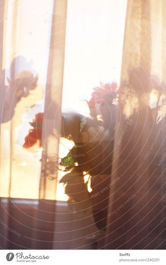 Lichteinfall Sommer Farbe Fenster braun Stimmung orange Wohnung Warmherzigkeit Abenddämmerung Vorhang Gardine Fensterscheibe Blumentopf Lichtspiel Lichtschein