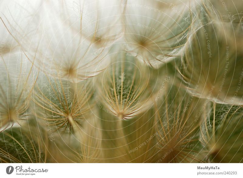 Himmel Natur Pflanze Farbe Sommer Blume Gras Freiheit Horizont Kunst Feld Energie Urelemente Unendlichkeit chaotisch Teamwork