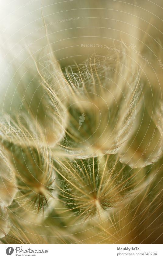 Natur Pflanze Farbe Sommer Blume Ferne Gras Freiheit Blüte Garten Kunst Park Feld Energie Urelemente chaotisch