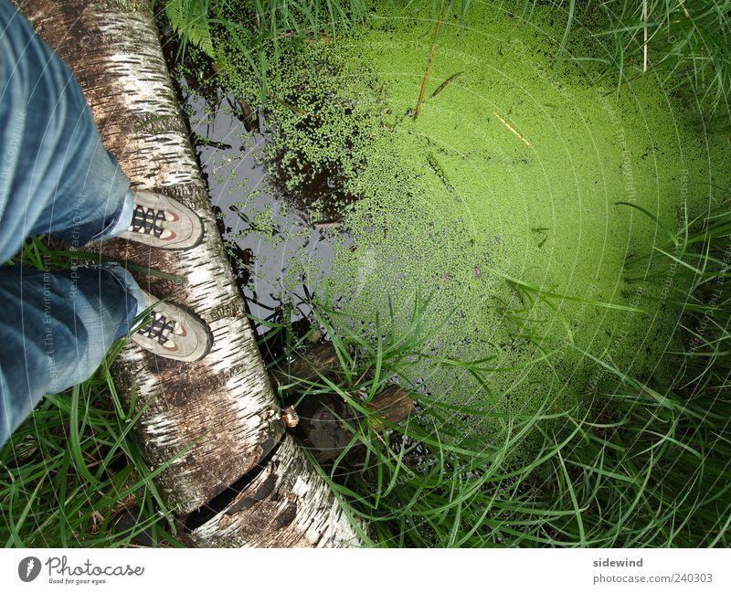 Grütze Natur Wasser grün Pflanze Umwelt Gras See natürlich Abenteuer stehen Baumstamm Gleichgewicht Teich Sumpf Moor Wanderschuhe