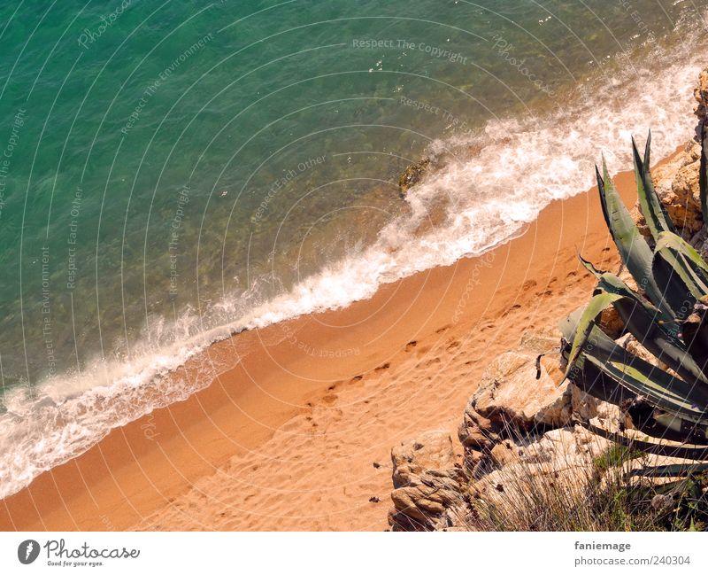 kaktus playa Natur blau Wasser grün Sommer Meer Wärme Küste Sand Stein braun Wellen Schönes Wetter Fußspur stachelig Kaktus