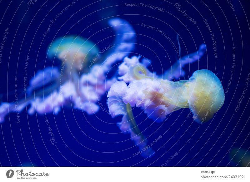 Quallen im Meer Natur Wasser 2 Tier einzigartig exotisch Farbe Unterwasseraufnahme Menschenleer Bewegungsunschärfe