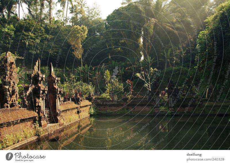 Bali I Natur alt Wasser grün Baum Pflanze Sommer gelb Wand Architektur Mauer braun natürlich Kultur Bauwerk historisch