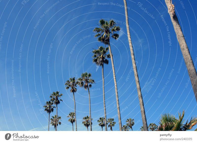 Kurve... San Diego Palme Himmel blau Wolken Natur Kalifornien Ferien & Urlaub & Reisen Erholung Reihe Freiheit Sommer Blauer Himmel Wolkenloser Himmel