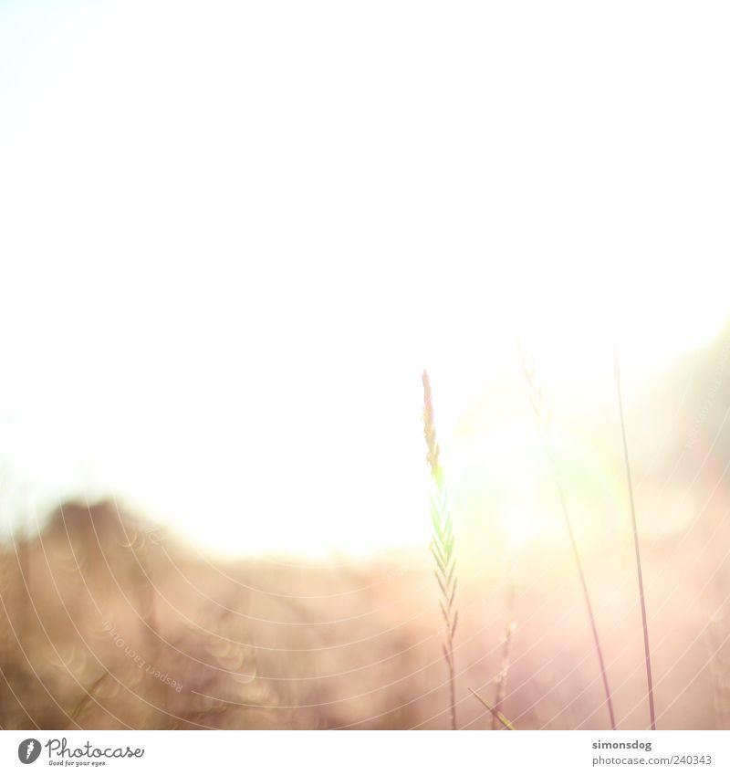 platz für mehr! Himmel Natur Ferien & Urlaub & Reisen Sommer Landschaft Wiese Wärme Gras Horizont leuchten Wüste trocken vertrocknet Blumenwiese beige Dürre