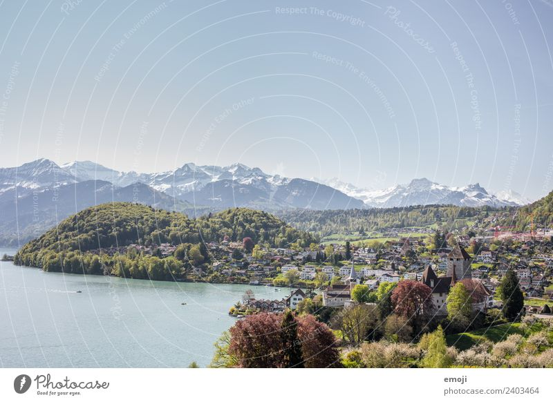 Spiez am Thunersee Umwelt Natur Landschaft Himmel Wolkenloser Himmel Frühling Sommer Schönes Wetter Berge u. Gebirge Kleinstadt Burg oder Schloss