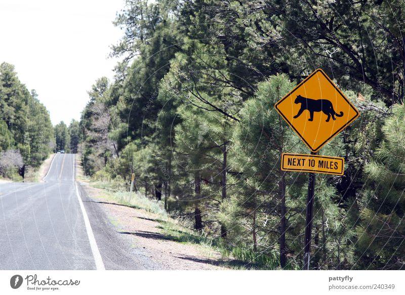 Achtung - WILD! Straße Wege & Pfade Schilder & Markierungen Verkehr Hinweisschild Grafik u. Illustration Verkehrswege Warnschild Verkehrszeichen Puma