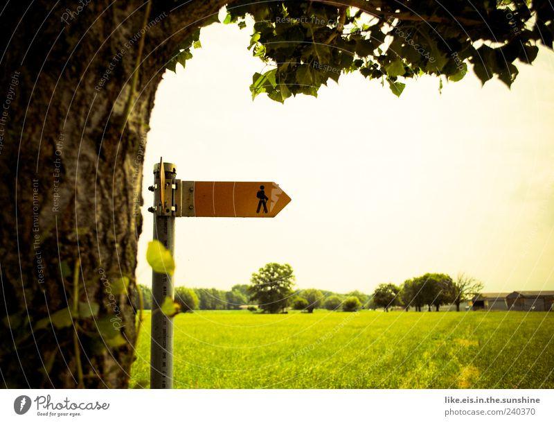 ja wohin wandern sie denn!? Natur Ferien & Urlaub & Reisen Sommer Baum Landschaft Umwelt Wiese Gras natürlich gehen Schilder & Markierungen wandern Ausflug Schönes Wetter Spaziergang Fußweg