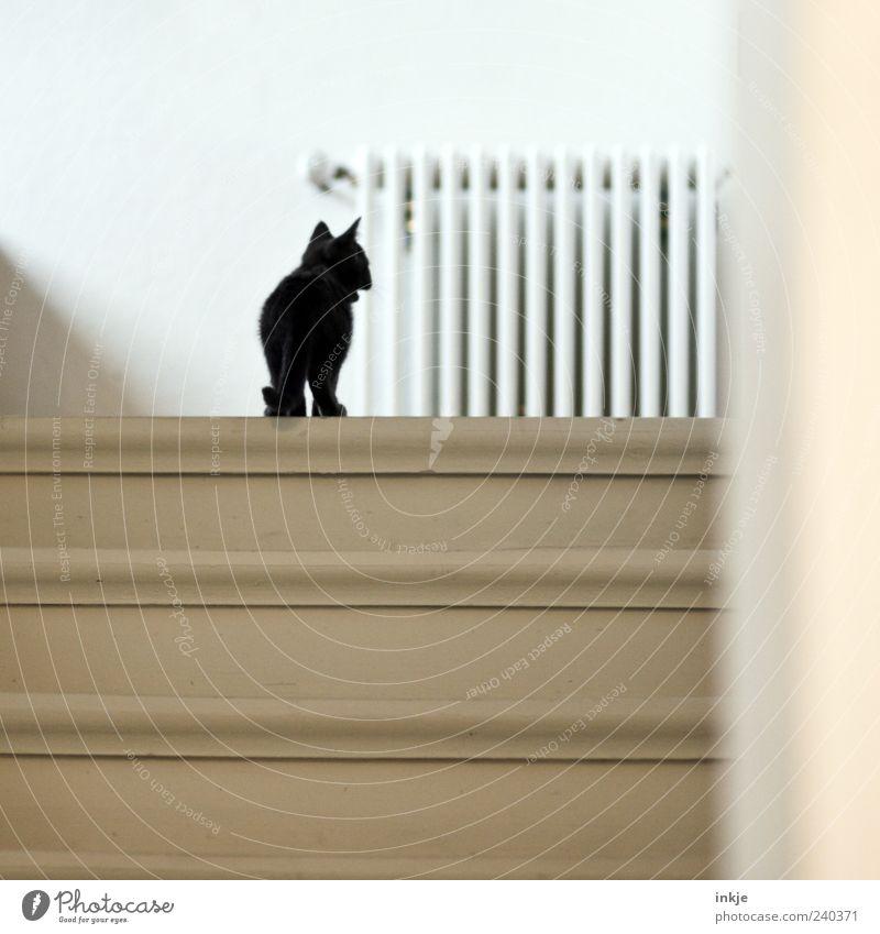 *maunz* Treppe Treppenhaus Holztreppe Haustier Katze Katzenbaby Hauskatze 1 Tier Tierjunges Heizkörper entdecken Blick stehen klein Neugier niedlich schwarz
