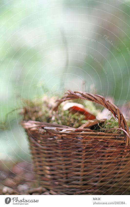 Körbchen Natur Pflanze Herbst Moos Blatt braun grün Korb Weidengeflecht Weidenkorb Herbstlaub Holz Tragegriff Behälter u. Gefäße Stillleben Dinge natürlich