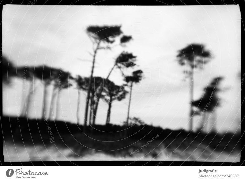 Weststrand Natur weiß Baum Pflanze Meer Strand schwarz Umwelt Landschaft dunkel Küste Stimmung außergewöhnlich natürlich wild Ostsee