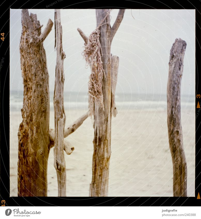 Weststrand Natur Pflanze Meer Strand Umwelt Holz Stimmung außergewöhnlich natürlich wild Seil Ast Ostsee vertikal Darß maritim