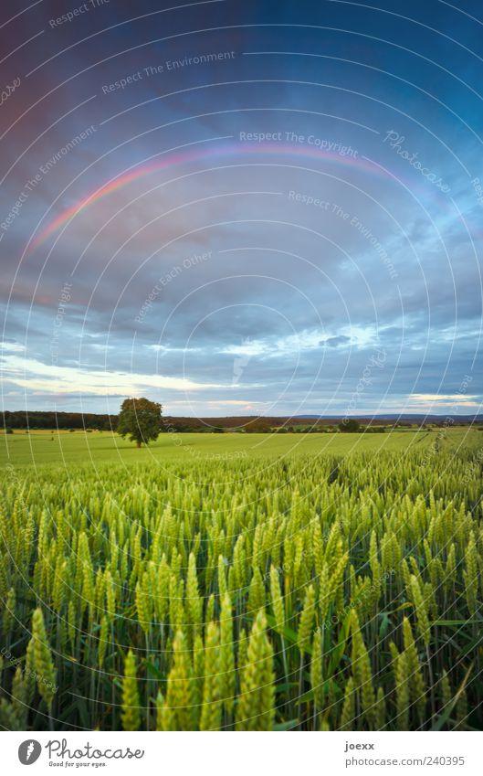 Drunter und drüber Umwelt Natur Landschaft Himmel Wolken Gewitterwolken Horizont Frühling Sommer Klima Wetter Baum Nutzpflanze Feld schön blau gelb grün violett