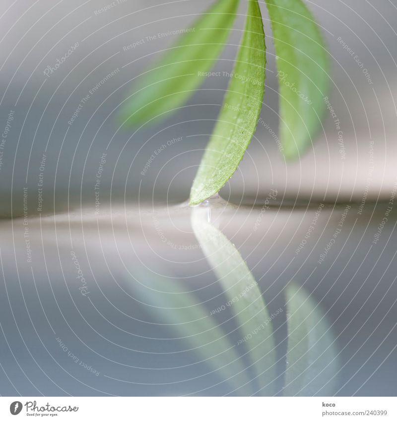 berührend Pflanze Sonnenlicht Frühling Sommer Blatt Wasser Wachstum ästhetisch außergewöhnlich Flüssigkeit klein nass blau grau grün schwarz weiß schön Farbfoto