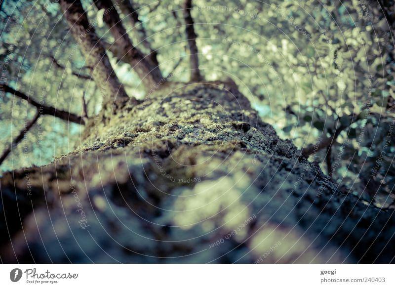 bark kissing tree hugger Umwelt Natur Pflanze Baum Baumrinde Ast Blatt Holz Farbfoto Außenaufnahme Menschenleer Tag Sonnenlicht Schwache Tiefenschärfe