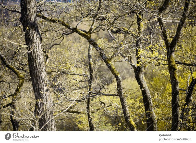 Geäst Natur Baum Wald Umwelt Frühling Wachstum ästhetisch Zweige u. Äste