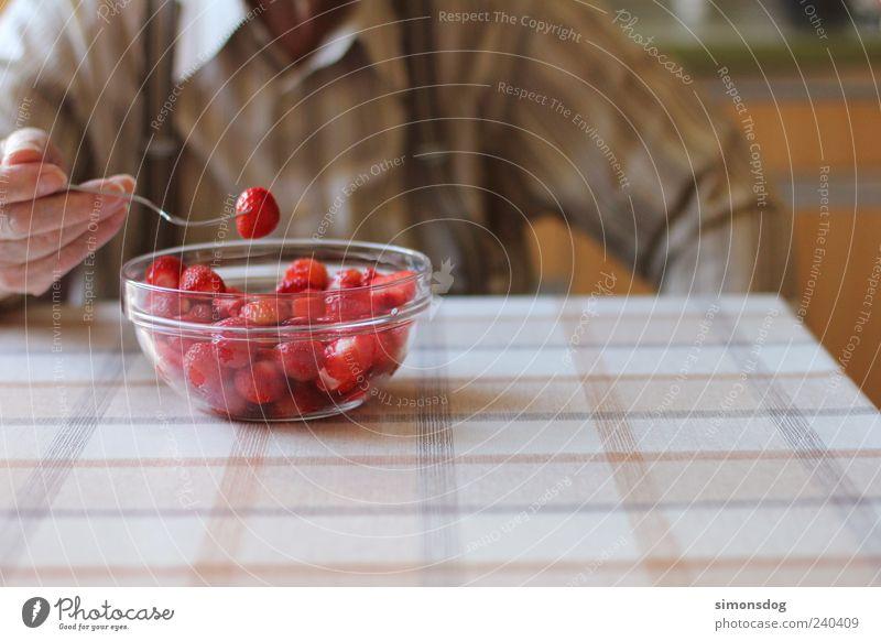erdbeeren genießer Frucht Dessert Ernährung Essen Bioprodukte genießen leuchten Gesundheit lecker saftig süß rot Erdbeeren Esstisch Männlicher Senior