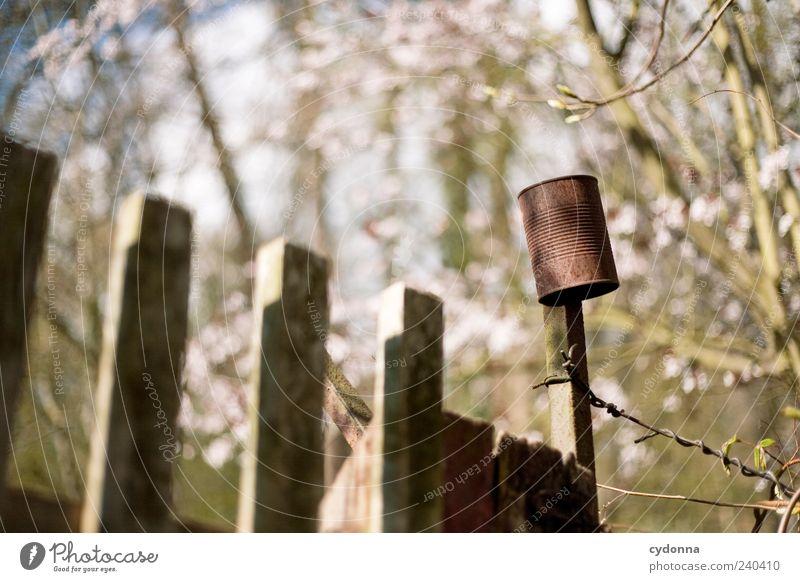Gartenklingel Natur Baum Einsamkeit ruhig Erholung Umwelt Leben Freiheit Garten Blüte Zeit Freizeit & Hobby Ausflug ästhetisch Lifestyle einzigartig