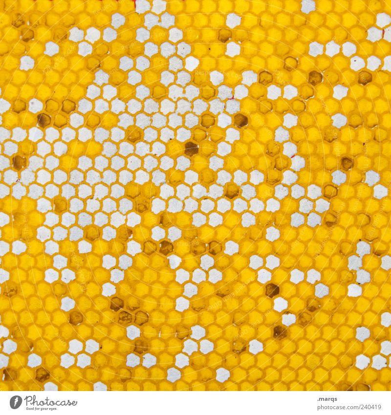 Polygon Farbe gelb Stil außergewöhnlich Ordnung Design viele Zeichen skurril Textfreiraum Wabe Strukturen & Formen abstrakt Muster Wabenmuster