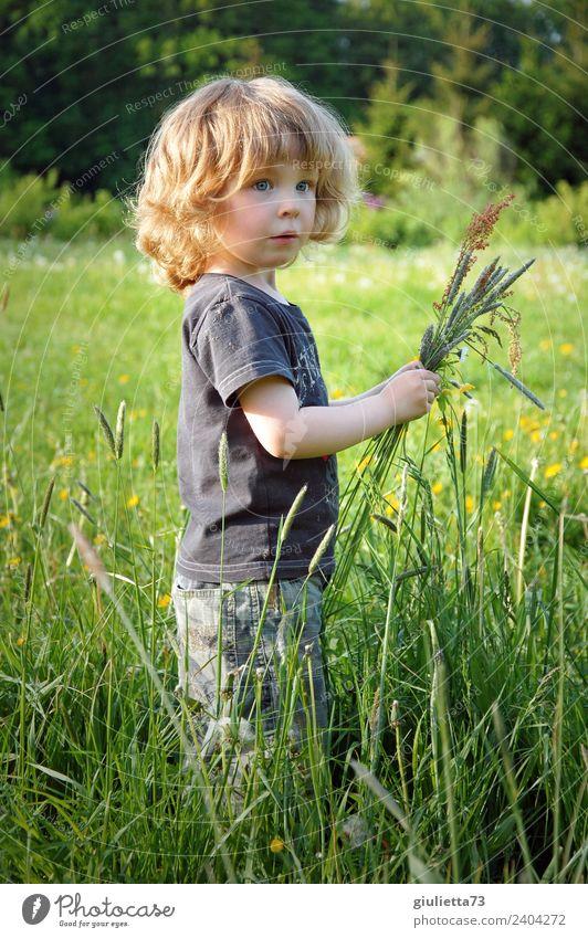 Jahreszeiten | Kleiner Junge auf einer Frühlingswiese im Mai Kind Kleinkind Kindheit 1 Mensch 3-8 Jahre Natur Schönes Wetter Gras Wildpflanze Gräserblüte Park