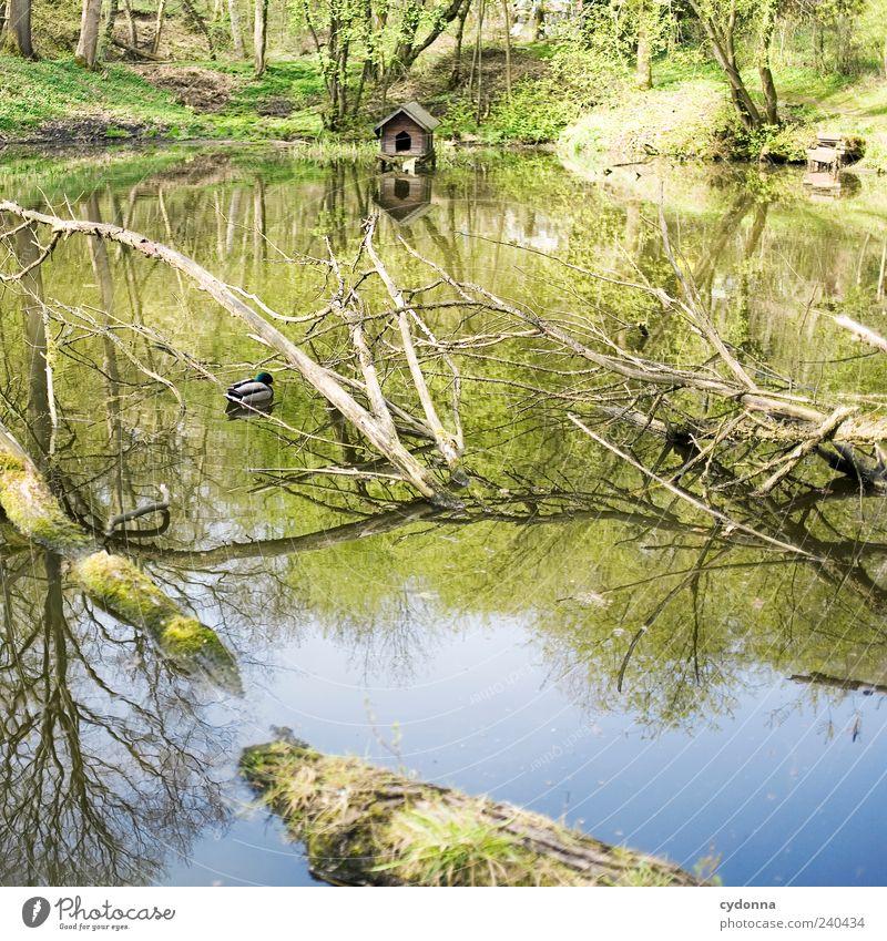 Verstecktes Entlein Natur Wasser Baum Tier Einsamkeit ruhig Erholung Wald Umwelt Landschaft Leben Frühling Freiheit träumen Ausflug einzigartig