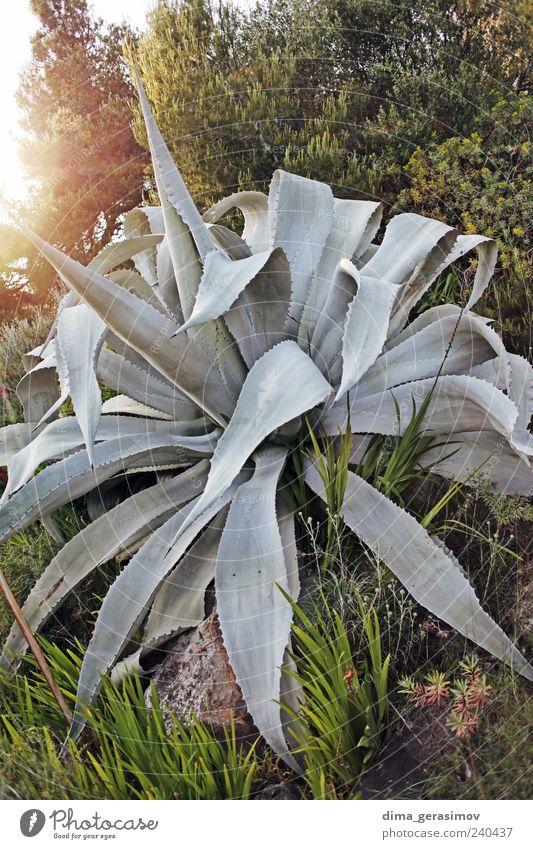 Natur schön Blume grün Pflanze Sommer grau Park Landschaft Kaktus
