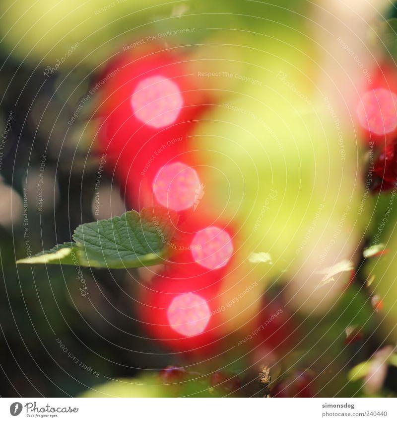 beeren lichter Frucht Sträucher Blatt Nutzpflanze glänzend leuchten frisch einzigartig grün rot Warmherzigkeit entdecken Farbe Inspiration Kreativität
