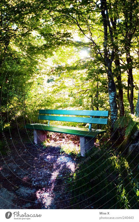 sonniger Sitzplatz Natur grün Baum Sommer ruhig Wald Erholung Frühling Stimmung Park hell Ausflug Hoffnung leuchten Idylle Schönes Wetter