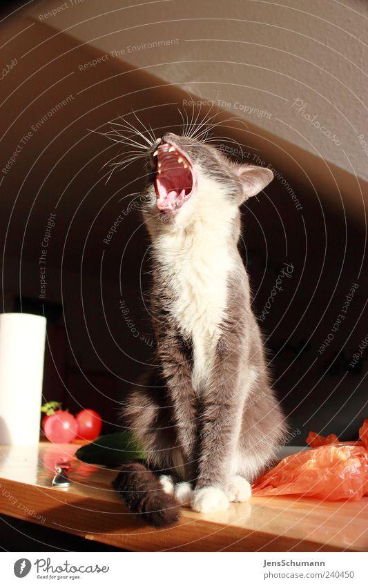 """""""Katzenmaul"""" Tier Haustier Tiergesicht Fell 1 Papier Verpackung Tomate Holz Müdigkeit Appetit & Hunger gefräßig Langeweile Farbfoto Innenaufnahme Menschenleer"""