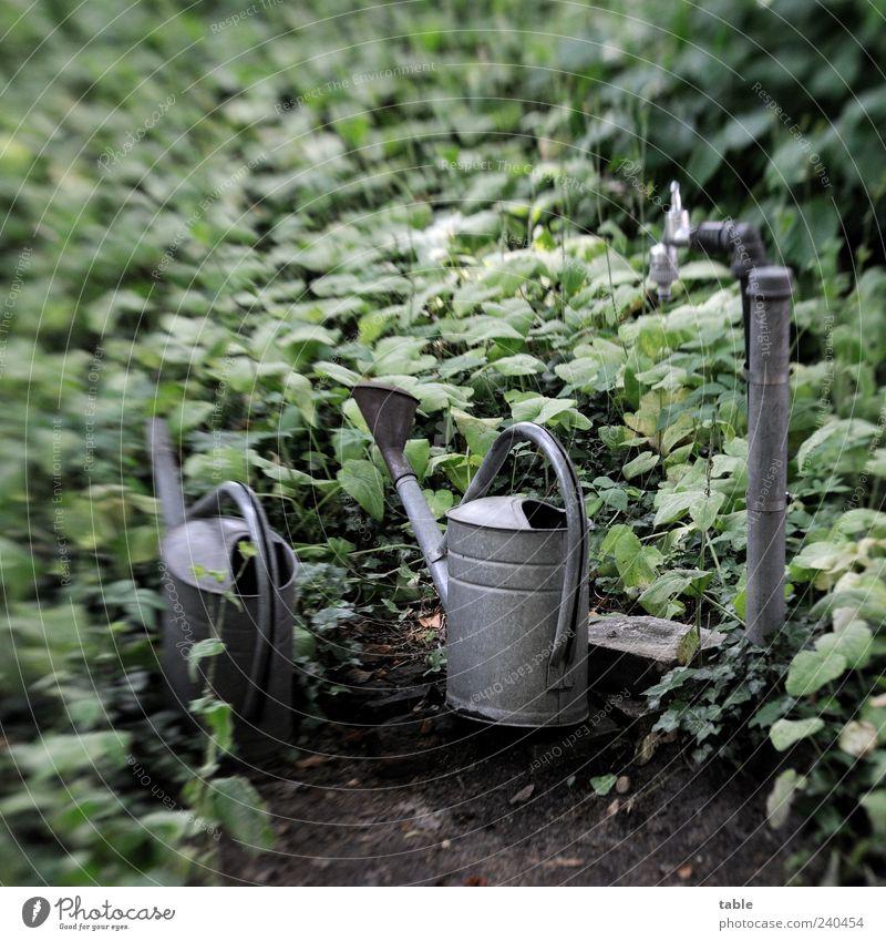 warten Natur alt grün Pflanze Einsamkeit ruhig dunkel grau Garten Traurigkeit Metall stehen Sträucher Trauer Vergänglichkeit