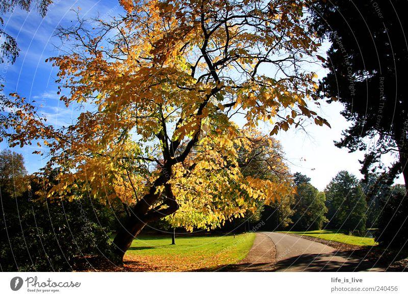 herbst_baum Natur Baum Blatt Umwelt Landschaft Herbst Wege & Pfade Park Inspiration Blauer Himmel
