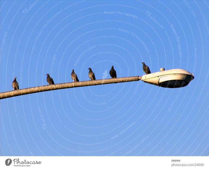 Taubenstopp! Straßenbeleuchtung Lampe Vogel Laterne