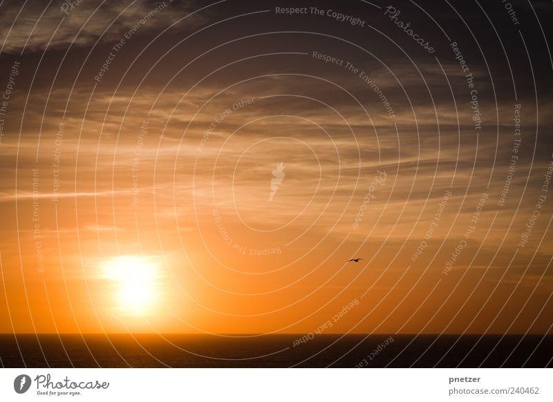 Richtung Sonne Umwelt Natur Landschaft Luft Wasser Himmel Wolken Horizont Sonnenaufgang Sonnenuntergang Sonnenlicht Sommer Klima Klimawandel Wetter