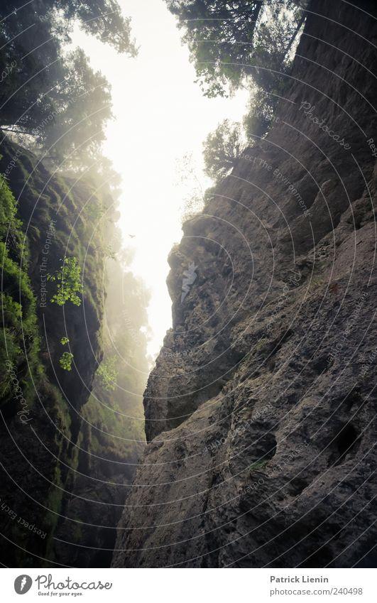 Magic Morning Berge u. Gebirge Umwelt Natur Landschaft Pflanze Urelemente Himmel Klima Wetter schlechtes Wetter Nebel Hügel Felsen Schlucht wild Stimmung Jura