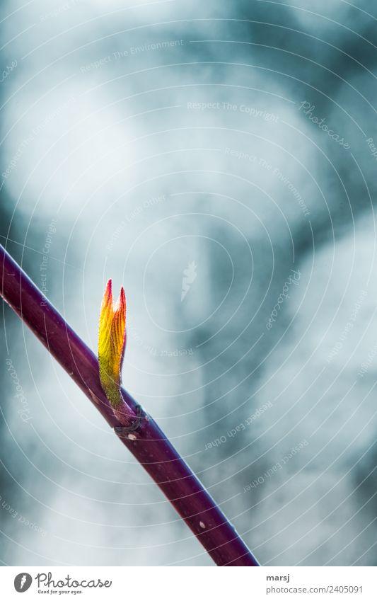 Jahreszeiten | zarter Frühling Natur Pflanze Blatt Hartriegel Blattadern leuchten Wachstum orange Frühlingsgefühle Vorfreude Kraft Willensstärke Reinheit rein