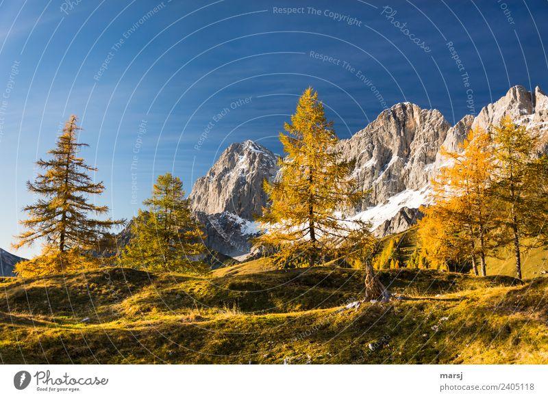 Jahreszeiten | vergoldeter Herbst harmonisch Erholung ruhig Ferien & Urlaub & Reisen Tourismus Ausflug Berge u. Gebirge wandern Natur Landschaft Schönes Wetter