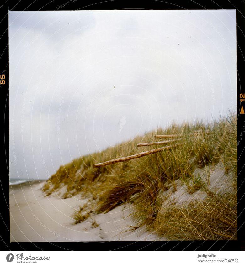 Darßer Ort Umwelt Natur Landschaft Pflanze Himmel Wolken Gras Küste Strand Ostsee Meer Weststrand Sand Holz natürlich wild Stimmung ruhig Farbfoto Außenaufnahme