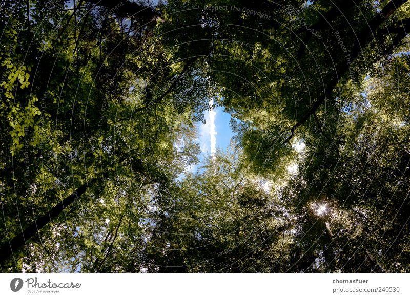 Silberstreif Himmel Natur blau grün Baum fliegen Schönes Wetter Kondensstreifen himmelwärts Streifen Blätterdach Hoffnungsstrahl