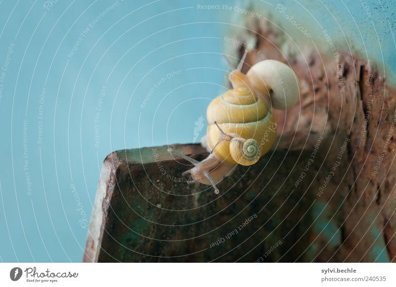 Schneckentaxi Tier gelb Bewegung Tierjunges Zusammensein Wildtier Zusammenhalt Stahl Geborgenheit Makroaufnahme Schneckenhaus mehrfarbig Tierfamilie Schmarotzer
