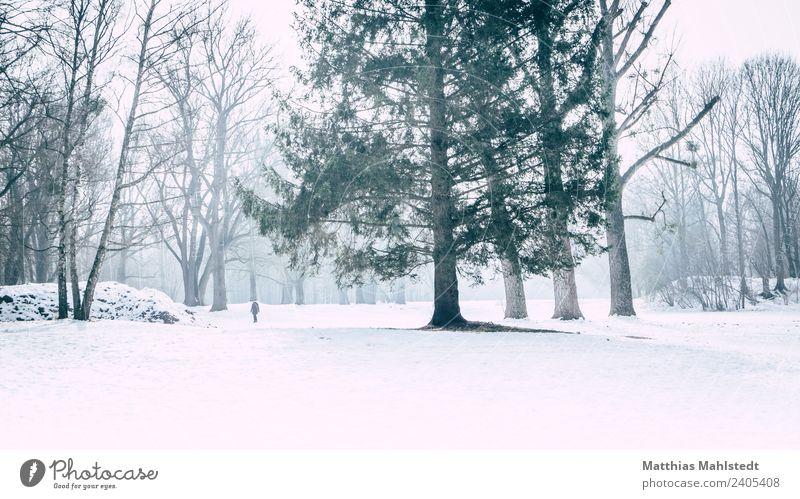 Lost in snow Landschaft Winter Nebel Eis Frost Schnee Baum Park gehen grün weiß Stimmung Sehnsucht Einsamkeit Erholung Frieden Ferne München Englischer Garten
