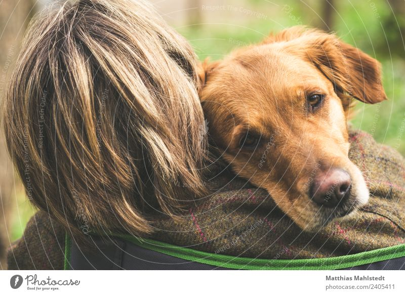 Best friends Tier Haustier Hund Tiergesicht 1 sitzen streichen träumen kuschlig natürlich niedlich weich braun grün Gefühle Glück Zufriedenheit Warmherzigkeit