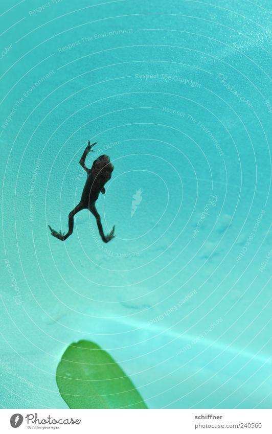 Huhu again! grün Blatt Tier klein Tierjunges Beine türkis Frosch Lurch