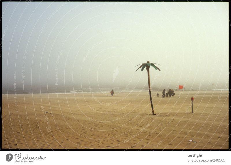 palme (künstlich) Mensch Himmel Natur Wasser Ferien & Urlaub & Reisen schön Sommer Meer Strand Erholung Ferne Landschaft Küste Freiheit Sand Menschengruppe