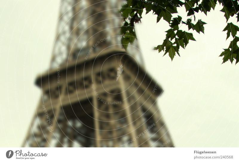 la tour Eiffel Ferien & Urlaub & Reisen Baum Pflanze Blatt Architektur Metall Kraft Ausflug Tourismus Macht Turm Neugier Bauwerk Paris Denkmal Wahrzeichen