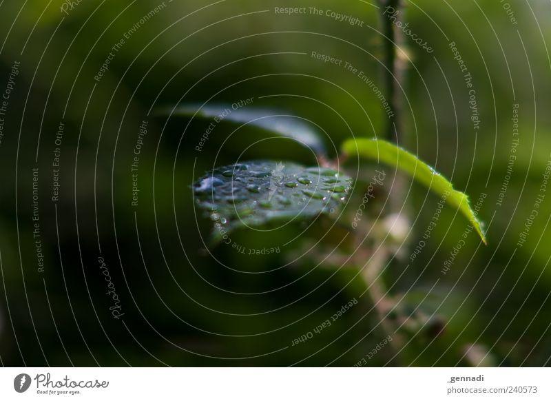 Rain you make me wet Natur Wasser grün Pflanze Blatt Umwelt glänzend natürlich Energie nass frei frisch Wassertropfen Urelemente Flüssigkeit Zweig