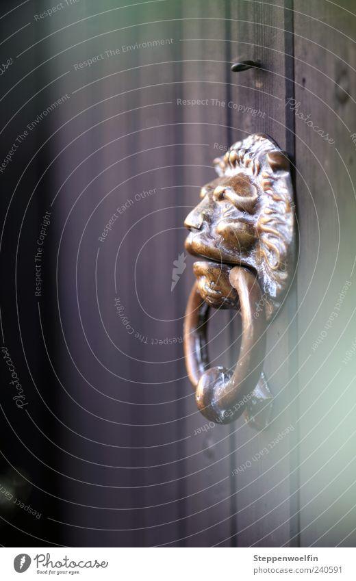 Klopflöwe weiß dunkel Holz Metall braun Tür gold glänzend geschlossen Häusliches Leben Reichtum Holzbrett Heimat Wert Willkommen privat